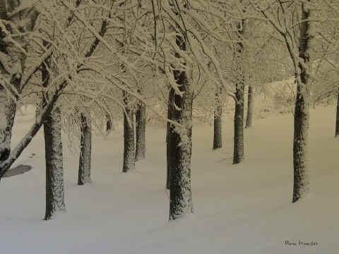 Nada como ver nevar al abrazo del calor...