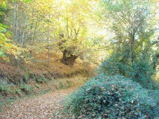 Al final de un camino como éste se divisa el pazo...