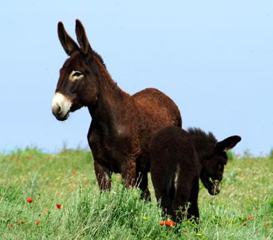 El Pony Eduardo Manostijeras