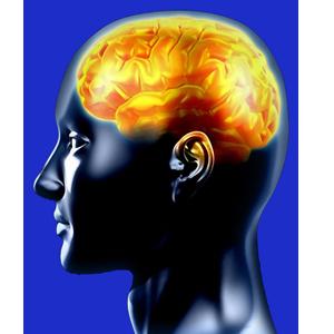 Un cerebro es una esponja que lo absorbe y lo resgistra todo. Pero también un caos...