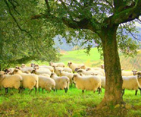 Señor, Señor...Hasta los chalecos de pura lana virgen son ...