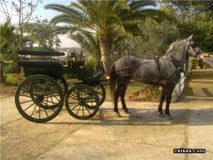 El ayuntamiento de Córdoba quiere poner dodotis a los caballos como éste...Cosas veredes, Sancho.