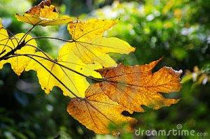 El otoño te ha enseñado su tarjeta amarilla. Es un aviso, pero también puede ser una oportunidad...
