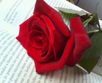Esta imagen esta tomada a modo de préstamo de paulaysuscosas.blogspot.com
