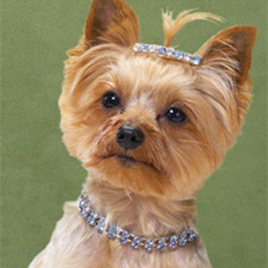 Qué sinvivir, pensar que la perrita Fifí puede sufrir de sus vértebras `pr el peso excesivo de su collar de diamantes...