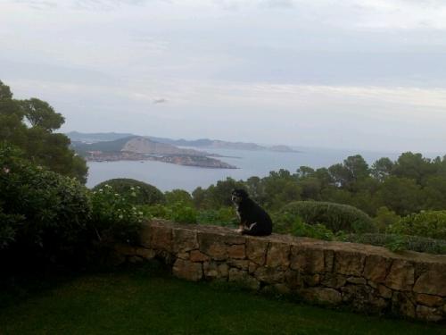 Perrro en Ibiza