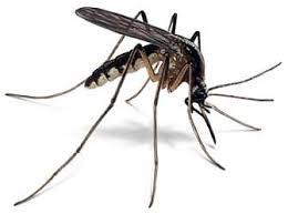 Cuando crees que puedes dormir feliz, puede aparecer una nueva preocupación en forma de mosquito...