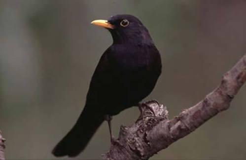 También el honrado invierno tiene su encanto, a veces en forma de pájaro...