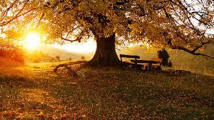 ...Y sin embargo, sería maravilloso que el atardecer en otoño no fuera tan breve