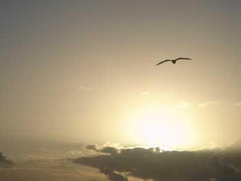 Sueño barato nº 346: Observar aves en un lugar pintoresco  mientras meriendas un bocata de anchoas de Santoña  con pimiento morrón...Y sueños así, la tira.