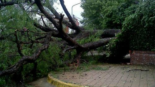 En Madrid se están cayendo muchos árboles. Sospechoso. Pero algunos de ellos, soprendentemente, sirven para recomponer amores ...