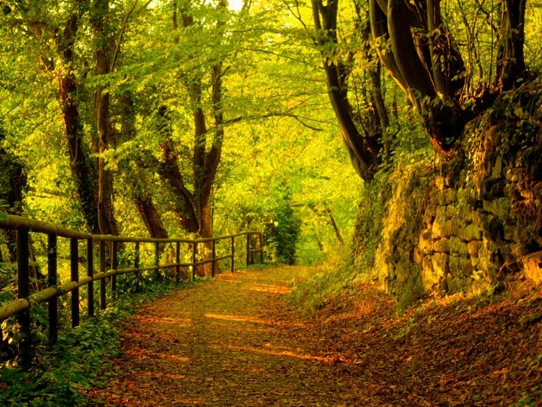 El camino hacia el otoño es prometedor. Aunque, en tus circunstancias, este año el tránsito se adornara de ciertos matices especiales que...