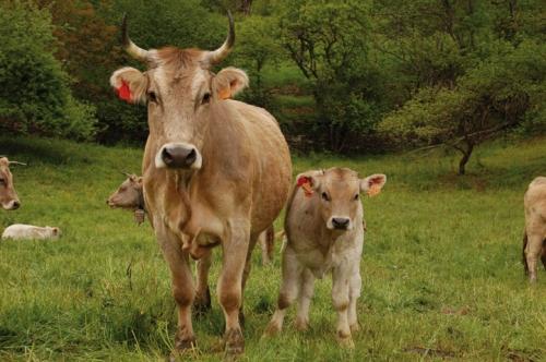 Se esperaba tanto de aquel 9 de noviembre, que el Agustinet incluso creyó que iba a curar la mamitis de sus vacas...