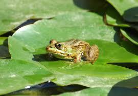 Esperando con tu nieto que salte la rana. Manera tropecientos doce de dar con el mazo para superar el verano...